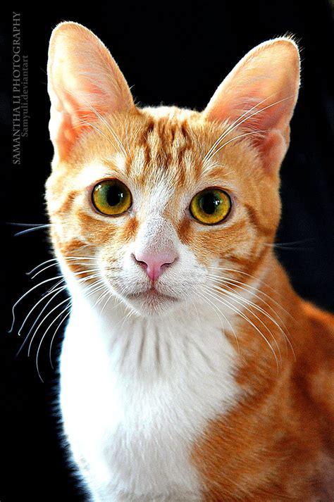 images cats cat portrait by samanthali on deviantart
