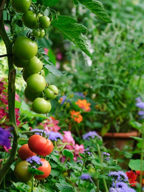 garden fruits and vegetables edible landscaping growing your own food hgtv