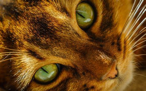 cat nose and whiskers cat nose whiskers green wallpaper 1920x1200
