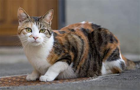 of cat genomics of cat domestication
