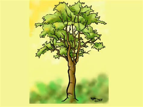 tree drawing how to draw a detailed tree 7 steps with pictures wikihow