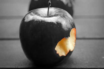 apple black genetically engineered crops the grand and failed promise