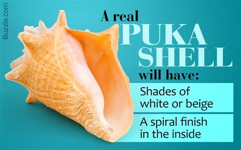 puka meaning this information about puka shells are secrets of timeless