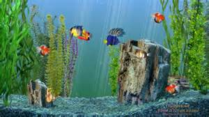 desktop background fond d 233 cran anim 233 aquarium gratuit mac