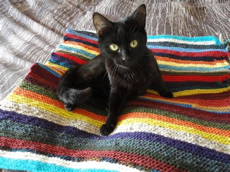 knitted cat blanket 17 best images about pet projects on