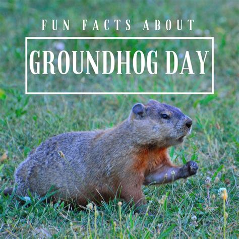 groundhog day used to something facts for about groundhog day coloradomoms