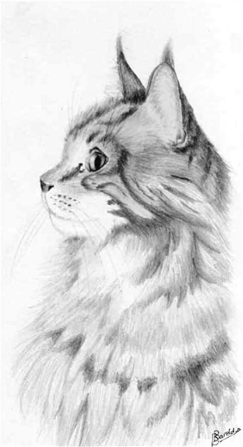 forum een tekening van je kat unitedcats