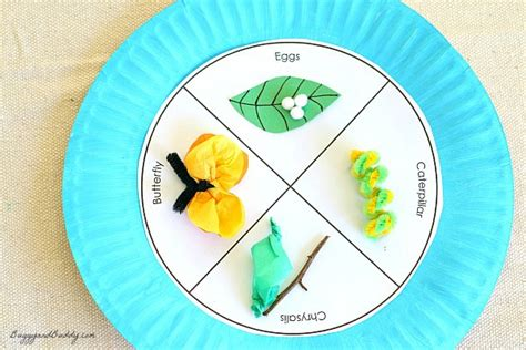 butterfly paper plate craft butterfly cycle paper plate craft buggy and buddy