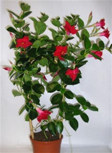 plantes d int 233 rieur archives jardiner avec jean paul
