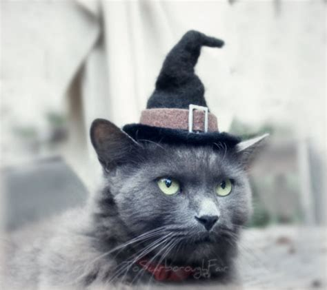 witches cat do cat costumes that don t bother cats exist