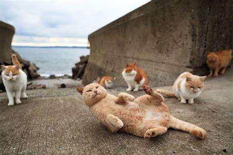 cat paradise top 40 photos of cats paradise in japanese fukuoka island