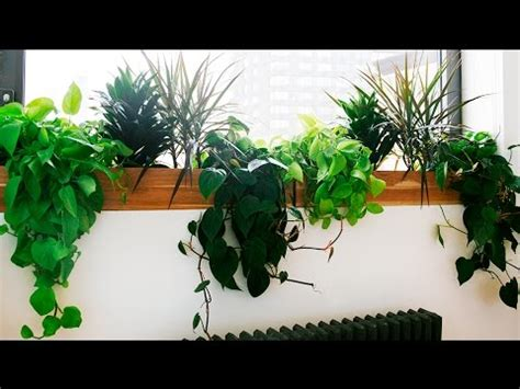 the best indoor plants best indoor plants best indoor plants low light