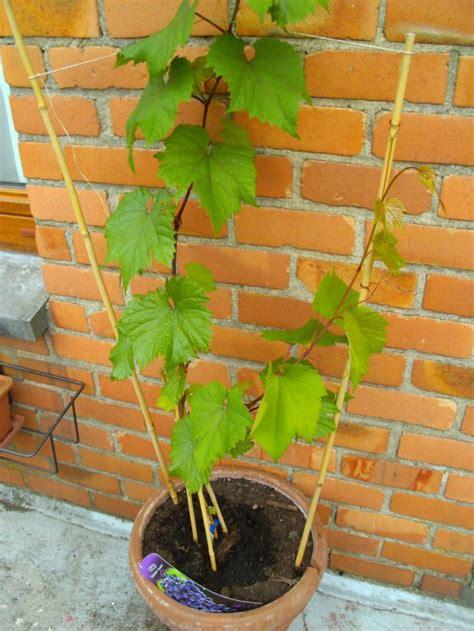 articles de virginie 376 tagg 233 s quot quand planter une vigne quot jardins de r 234 ve skyrock