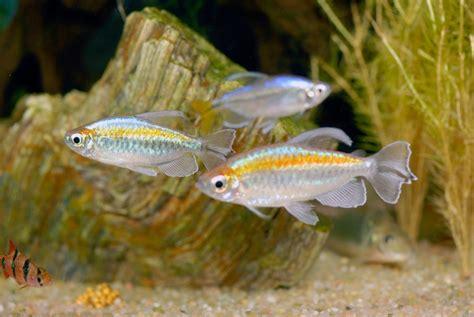 aquarium eau douce poisson exotique