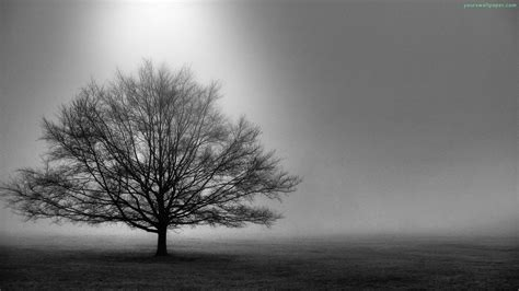 black and white tree tree black and white hd background wallpapers 4253