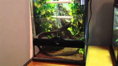tree set up green tree python cage set up care