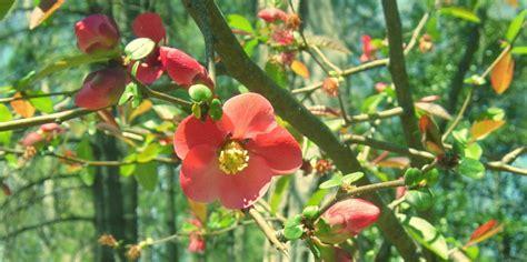 winter flower garden how to plan your winter flower garden diyit