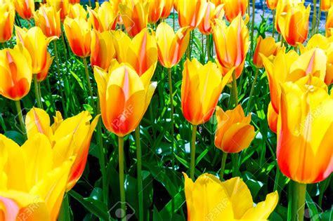 netherlands flower garden netherlands flower garden zandalusnet chsbahrain