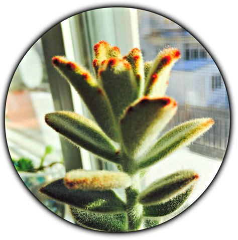 houseplants for low light conditions 100 houseplants for low light conditions five easy