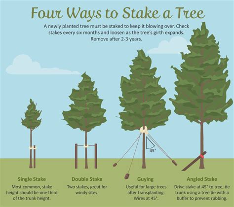 stake trees selecting the right tree for your garden fix