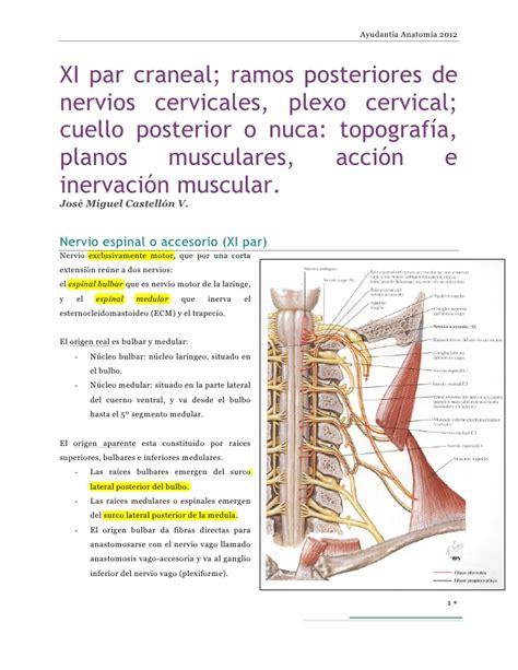 cadenas ganglionares slideshare xi par craneal ramos posteriores de nervios cervicales