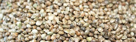 seed wholesale seeds images