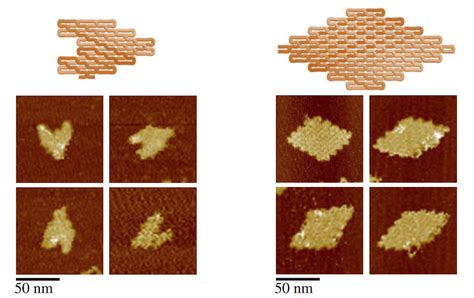 dna origami applications dna that folds like origami has applications for