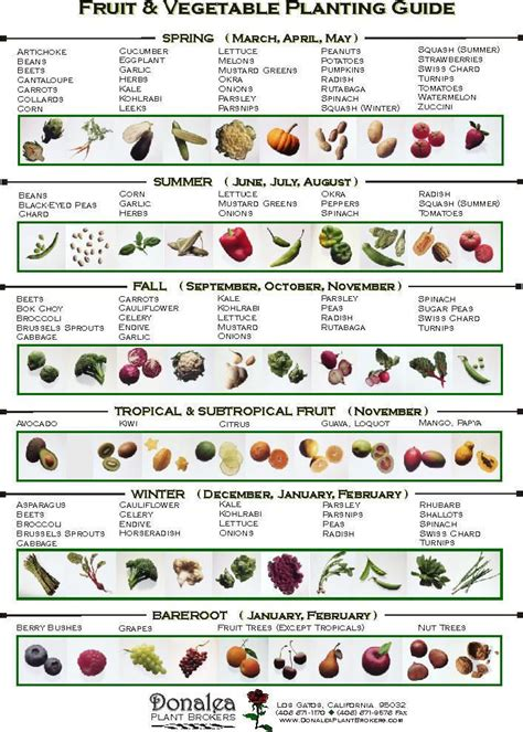 vegetable garden plants list when to plant vegetables for our soon to be new