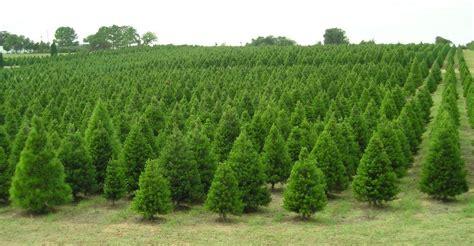 owasso tree farm collection tree farm tulsa pictures best