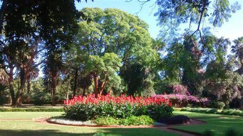 Garden Bulawayo Cannas In Bulawayo City Gardens Photo
