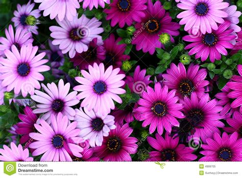 flower images flowers royalty free stock photo image 4999705