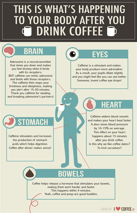 What Happens To Your Body After You Drink Coffee   Best Infographics