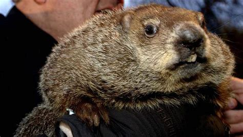 groundhog day 2015 punxsutawney phil 5 fast facts you need to