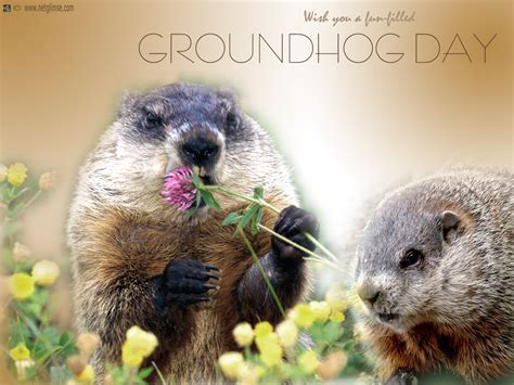 groundhog day of groundhog day wallpapers hd