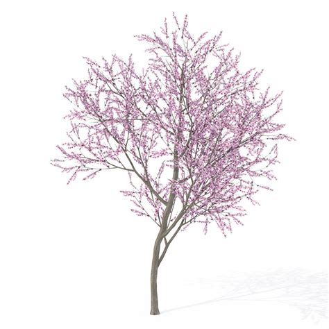cherry blossom tree 3d model free cherry blossom 3d model free crisesource