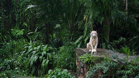 animal jungle humanities minecraft biome jungle wenyu s