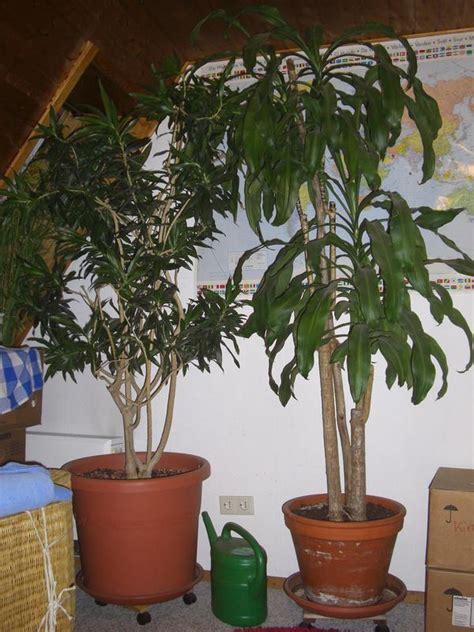Garten Weil Der Stadt by Gro 223 Pflanzen B 252 Ropflanzen Wintergarten Hohe R 228 Ume In