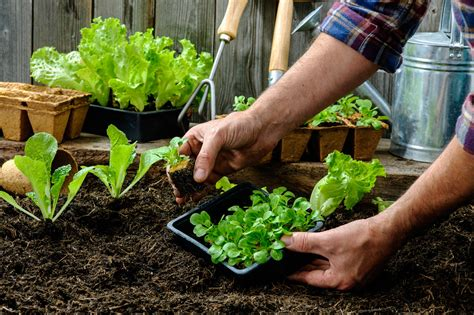 the vegetable garden carefree lawn center how to plan a vegetable garden