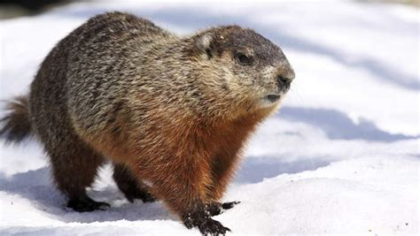 groundhog day 2015 when is groundhog day 2015
