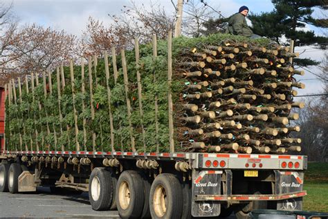 tree sales posts the scribe s garret views from scotia canada