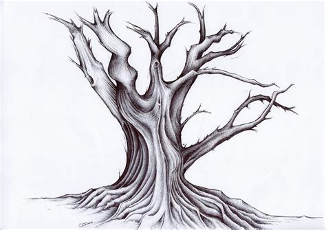 tree drawing 20 tree drawings jpg
