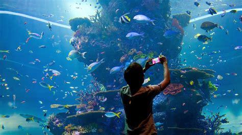 s e a aquarium yoursingapore