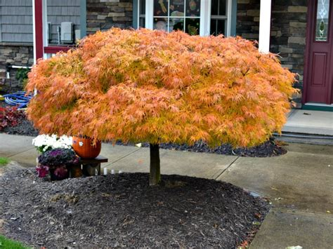 8 plants with spectacular fall colors