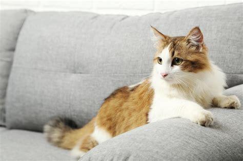 comment retirer les traces et les odeurs d urine de chat sur un canap 233 en tissu les astucieux