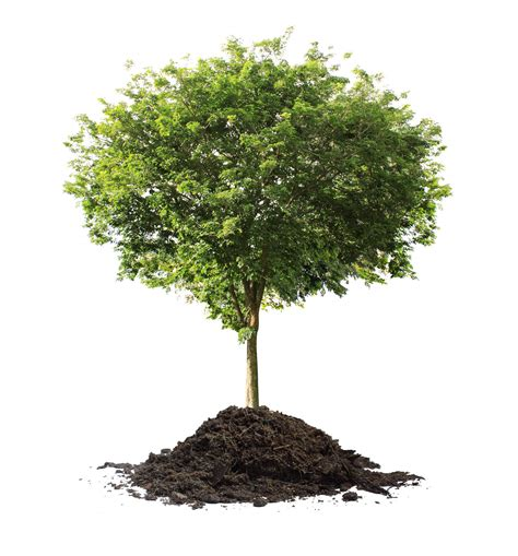 celebrate it tree celebrate arbor day in greene on friday get a free tree