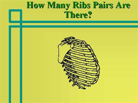 how many are there how many ribs pairs are there