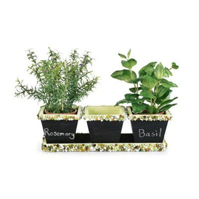 blackboard paint new zealand 1000 ideas about herb pots on diy herb garden