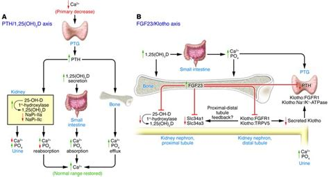 clinical biochemistry disorders of calcium metabolism 183 storify