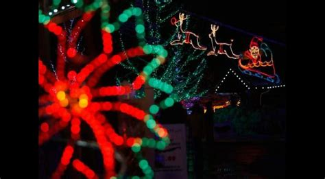 zoo lights miami zoo lights south florida finds