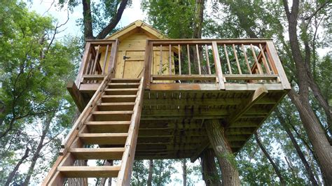 best treehouses the best trees for building treehouses thompson